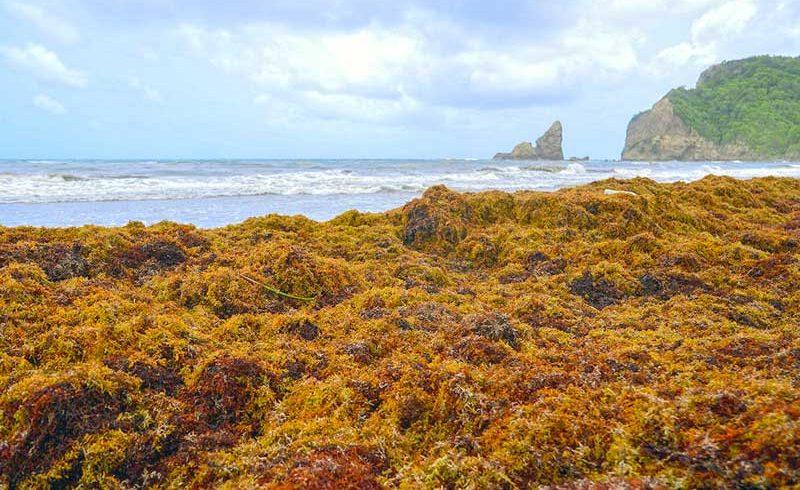 Traitements des algues