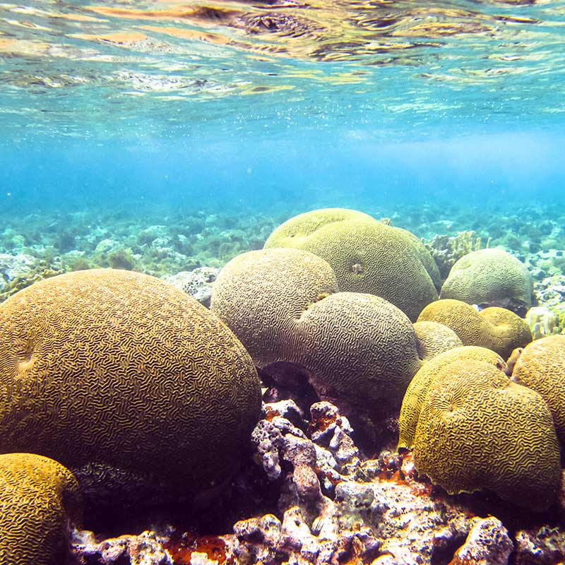 Protection des fonds marins