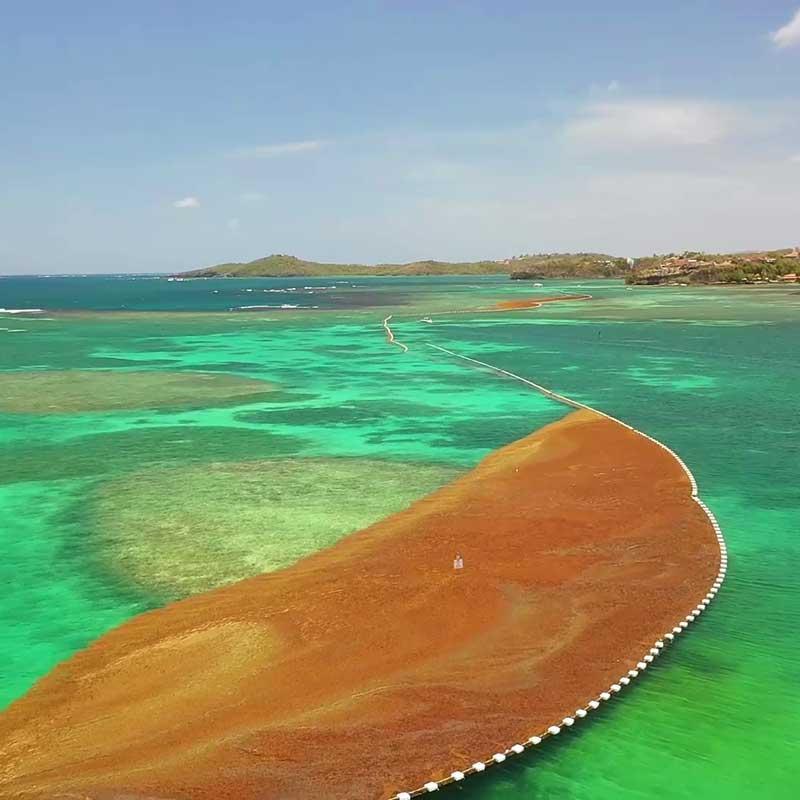 Filets anti-algues Petit Bourg Guadeloupe