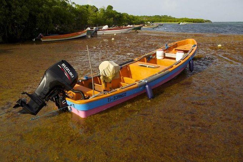 Un fléau nommé Sargasses – Outre-mer la 1ère