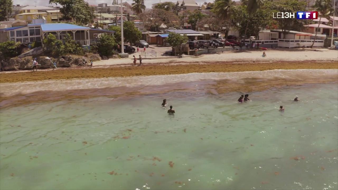 Invasion de sargasses en Guadeloupe : les grands moyens déployés pour se débarrasser des algues
